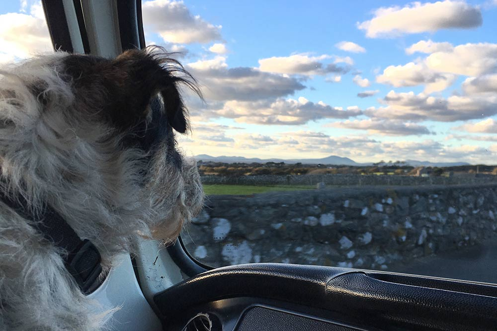 Our dog Archie in Nell our campervan